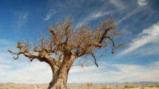 Parched tree in the desert landscape
