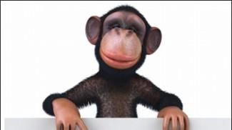 monkey sign2
