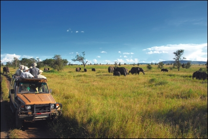 Serengeti Tour