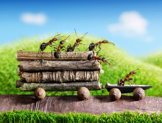 teamwork ants