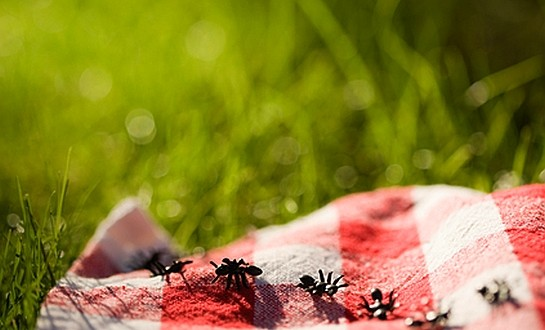 Planning Your Business Can Be A Real Picnic - Small ...