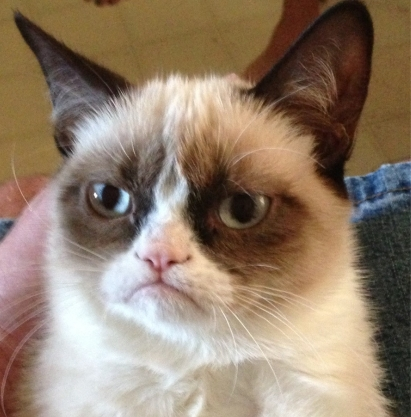 Grumpy cat trademark