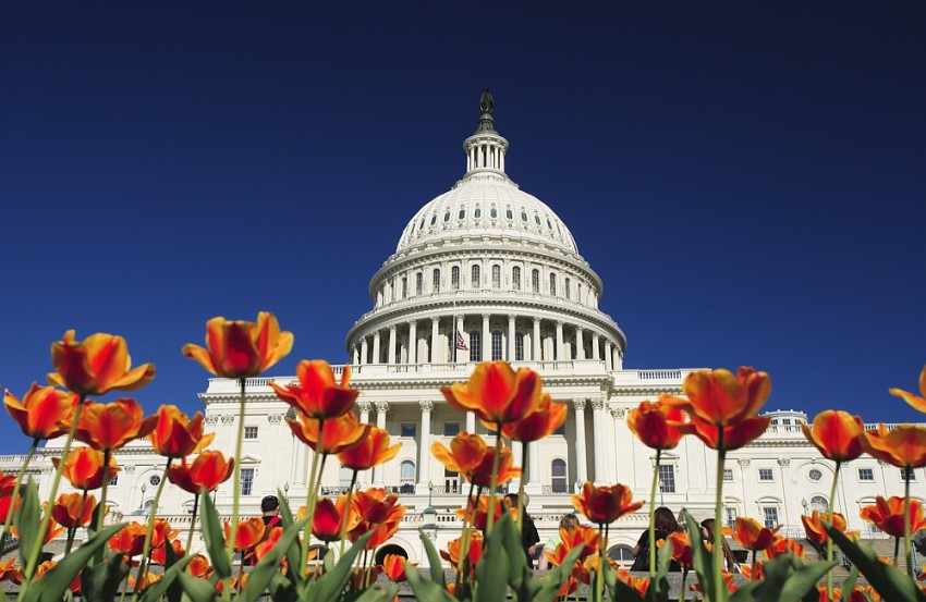 us capitol building flowers