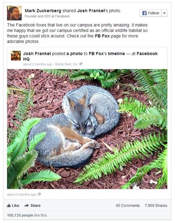 facebook embedded posts