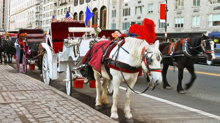 Horse and Carriage Controversy Threatens Small Carriage Owners