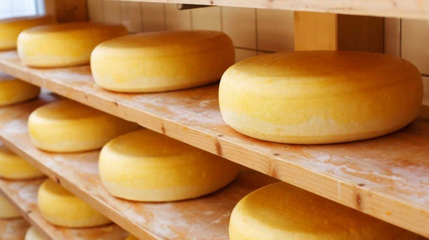 small business cheese making