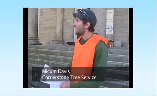 cornerstone tree care