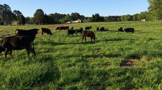 small farming business