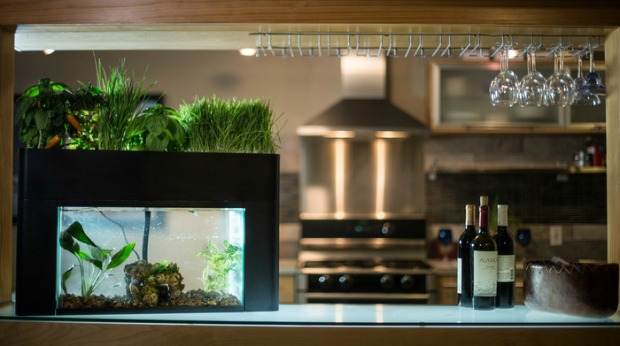 Would you buy a vegetable garden fertilized by fish poo for 10 fish in a tank riddle