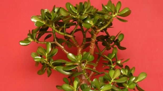 20 Small Indoor Plants That Can Improve Your Office Environment