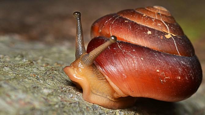 111614 snail