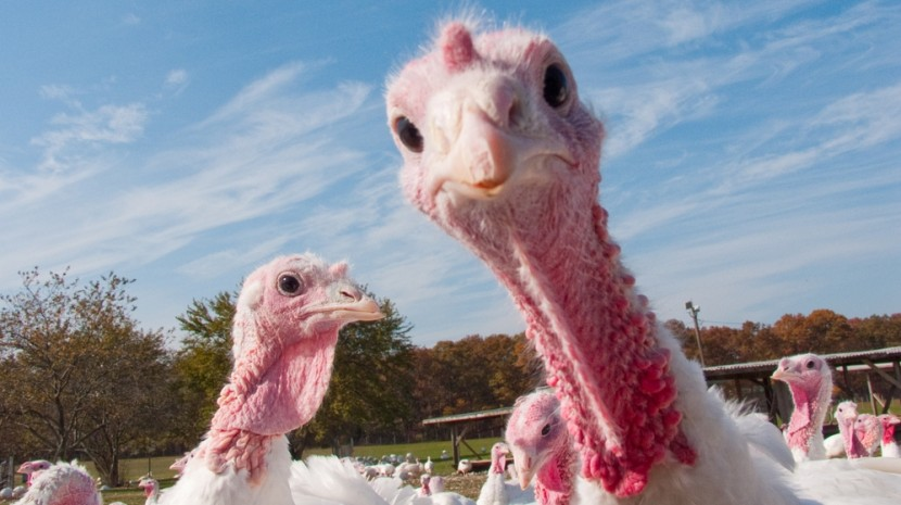 Koch's Turkey Farm