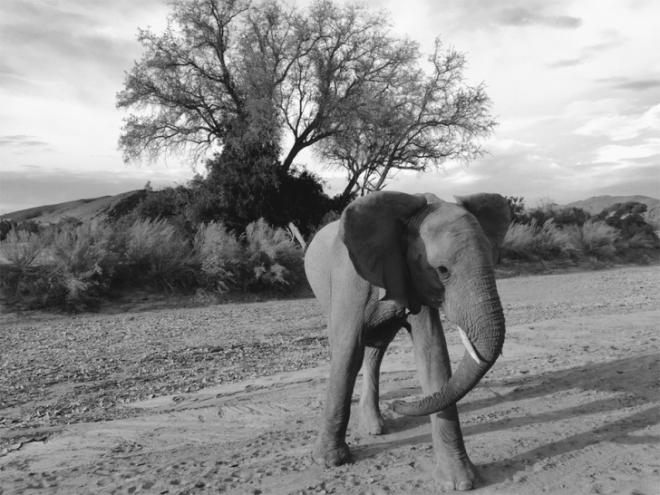 07 Jen-B.-Skeleton-Coast-Namibia-728x546