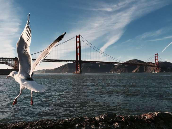 16 Shan-L.-San-Francisco-CA-728x546