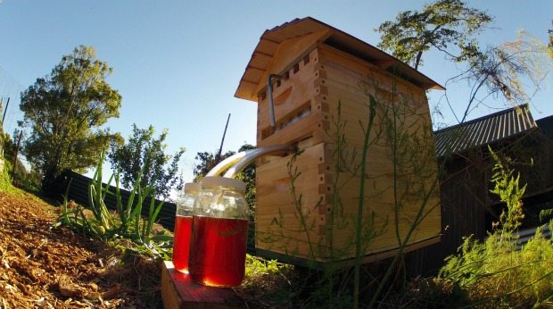 Flow Hive Harvesting Honey