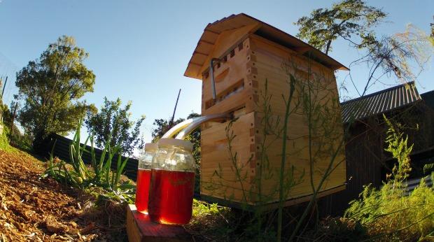 Flow Hive Harvesting Honey