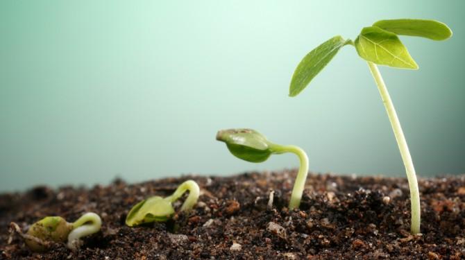 final growth
