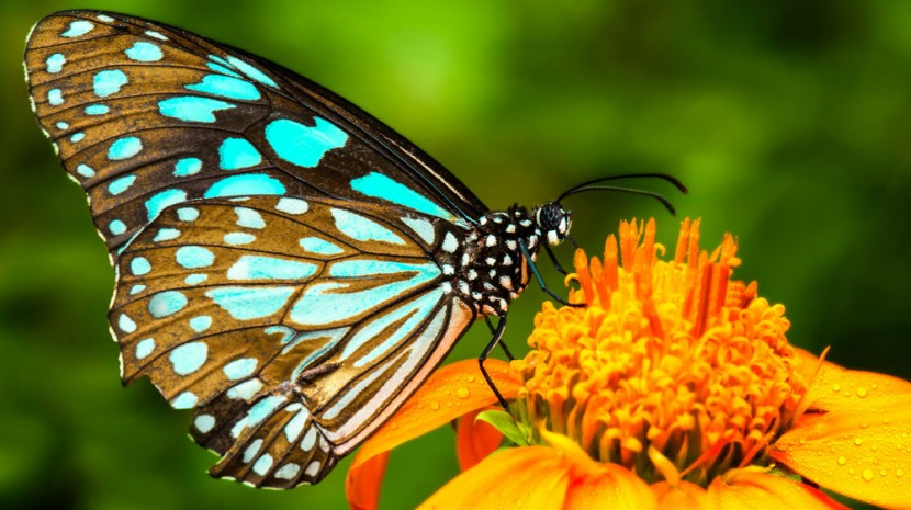 butterfly flower