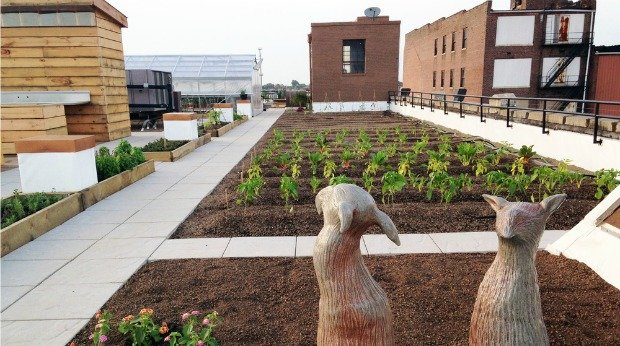 urban roof farm community revitalization
