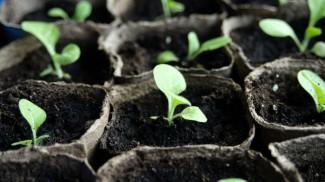 Pre-Seed Stage Gap