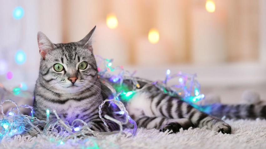 cat in lights