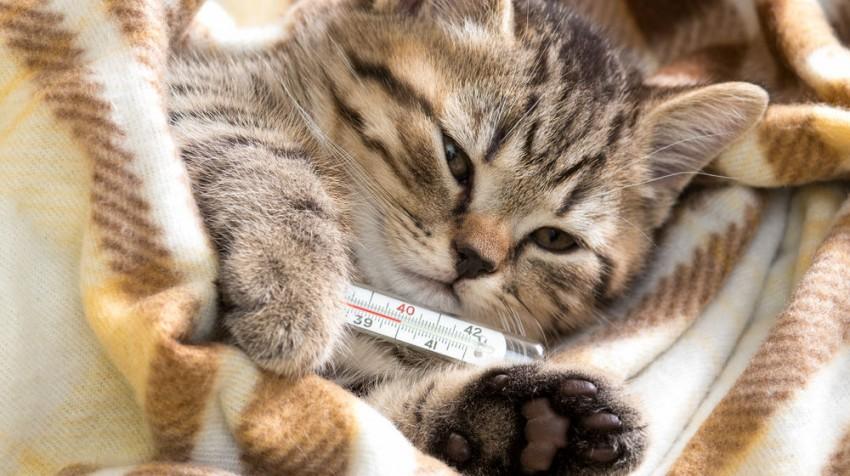 sick kitten