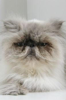 small biz cat headshot
