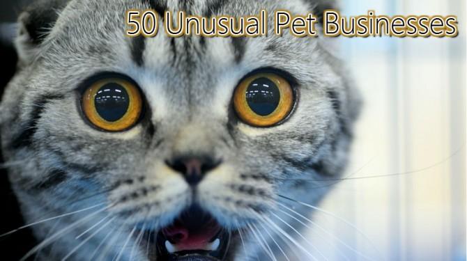 50 pet businesses unusual