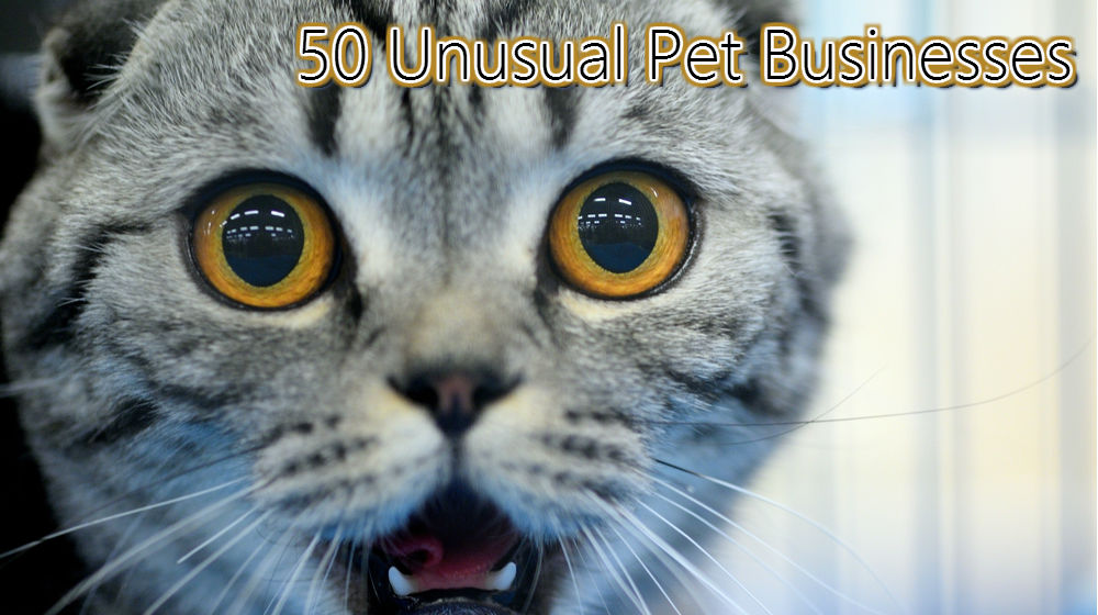 50 Unusual Pet Business Ideas to Consider Starting - Small Business