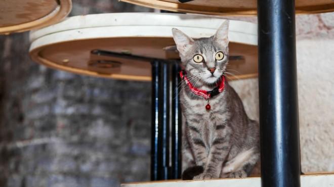 cat at restaurant