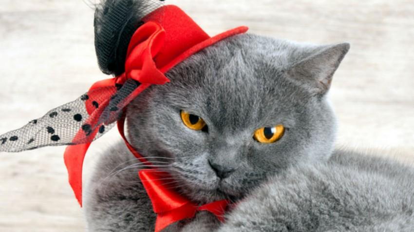 Unusual Pet Business ideas