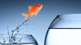 fish jump