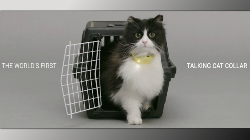 talking cat collar Catterbox