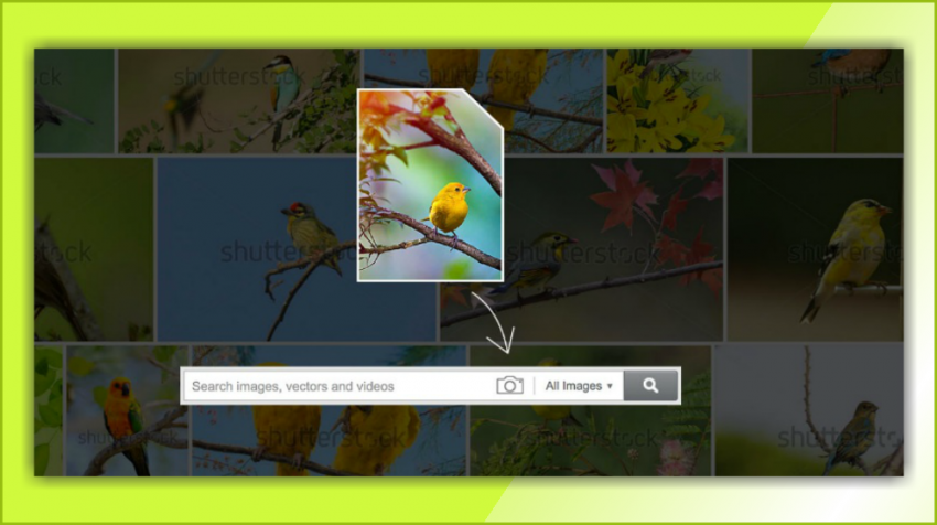 Shutterstock, Wix Announce New Online Business Tools