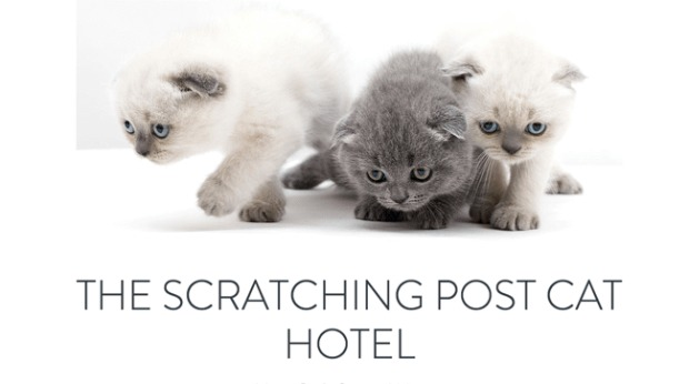 AI Web Design - Scratching Post Cat Hotel