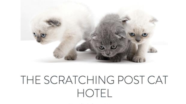 AI Web Design - Scratching Post Cat Hotel