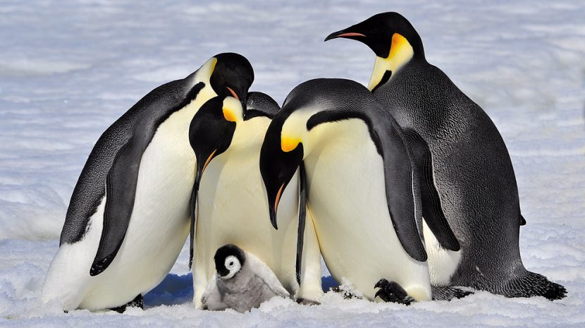 Penguin 4 Is Here and It's In Real Time