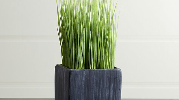 20 Best Business Gifts for Under 10 Dollars - Mini Potted Grass