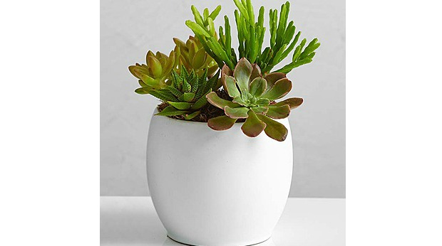 20 Best Business Gifts Under 25 Dollars for 2016 - Succulent Garden