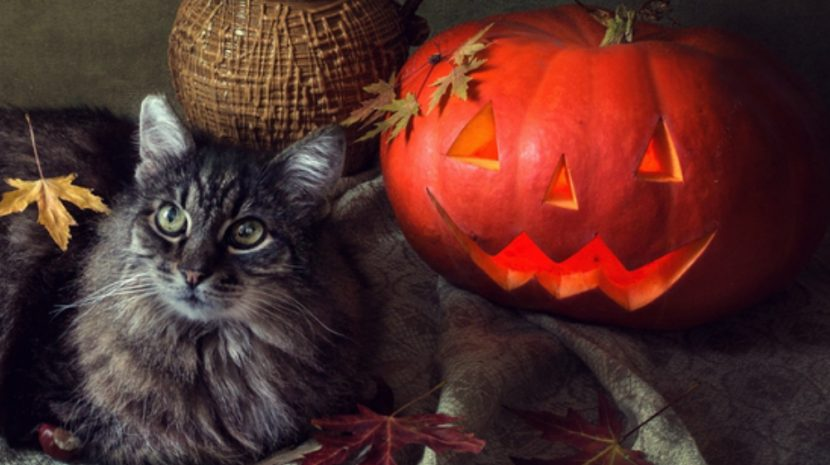 13 Online Halloween Marketing Ideas