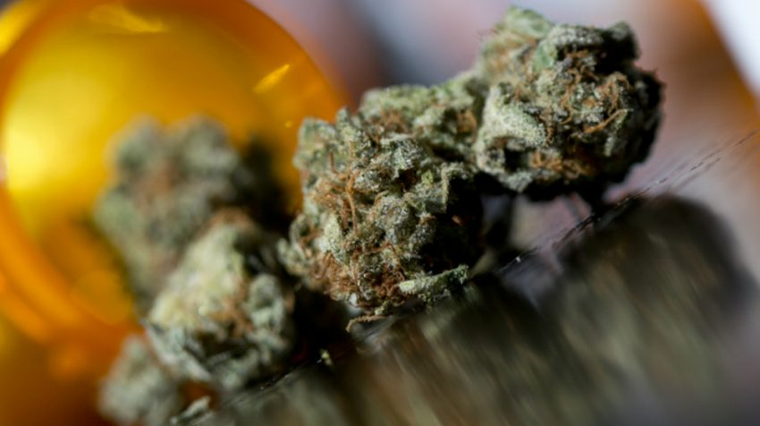Supplier Negotiations in the Medical Marijuana Supply Chain