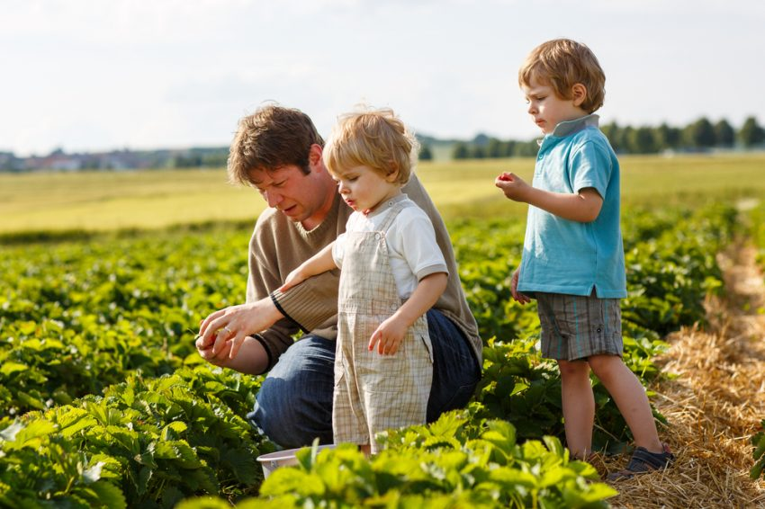50 Family Business Ideas - Farm
