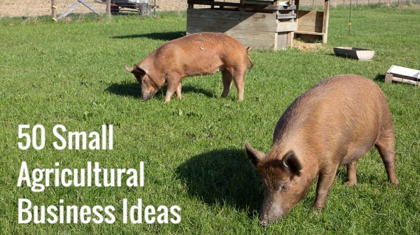 Small Agricultural Business Ideas