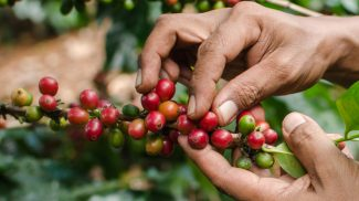 Coffee prices are way up. What will be the effect of coffee prices on businesses and their own prices and bottom line results?