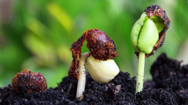 Merging Seed Stage Companies