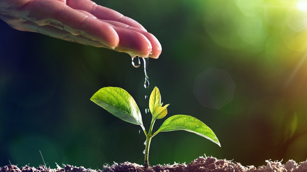 How to Increase Organic Social Media Growth