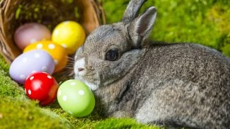 2017 Easter Spending Estimates: Small Businesses Will See Billions in Sales This Easter