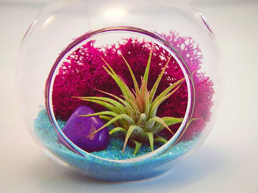 25 Office Desk Plants Air Plant Terrarium