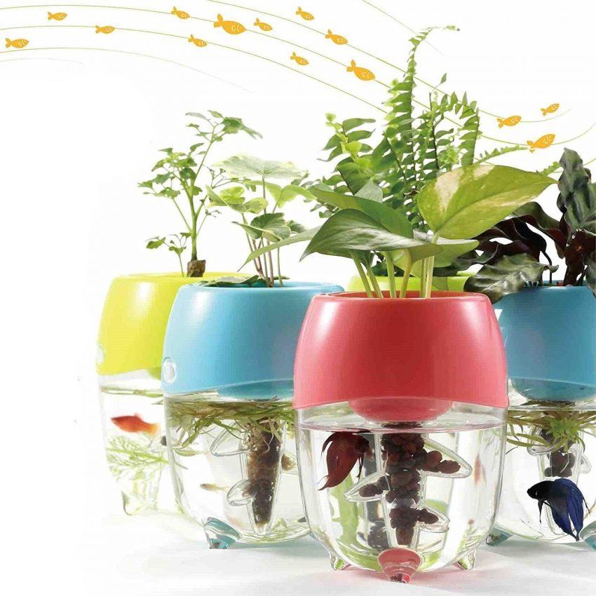 Aquaponic Fish Tanks