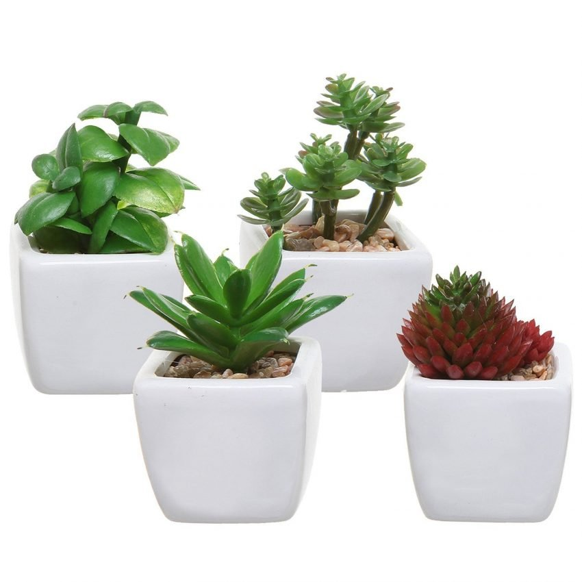 30 Office Desk Plants To Brighten Your Small Business Small Business Trends